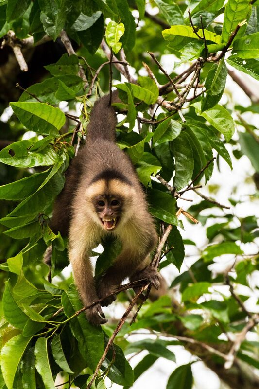 Peru Amazon Monkey, Photo by Brian Shepard