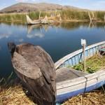 Peru_LakeTiticacaCondor_SallyVihlen