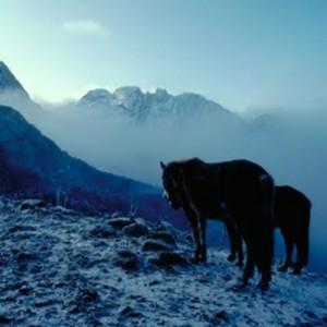 Bhutan trek horses