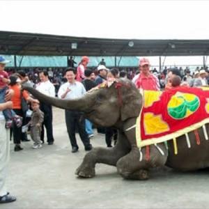 China elephant performance