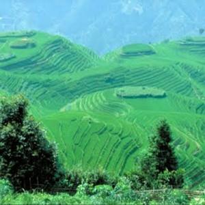 travel to china rice fields
