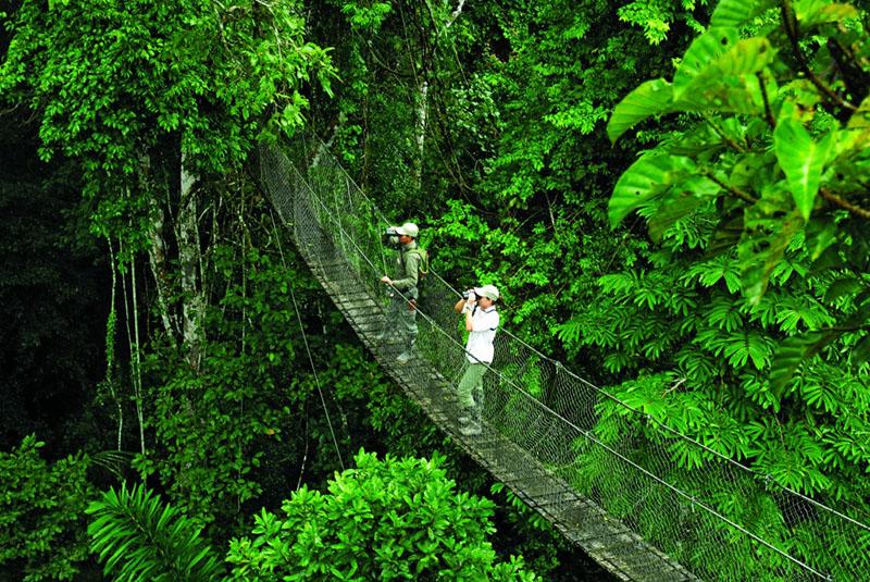 Amazon Guided Hike - Inkaterra Reserva Amazonica