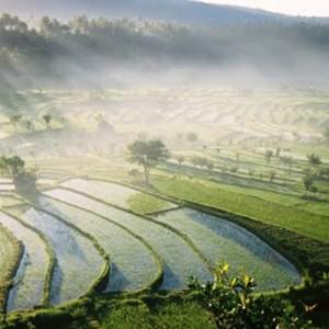 Indonesia_Bali_Ricefield_ICS