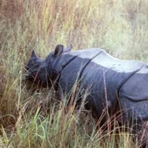 Nepal_Gaida_Rhino.jpg