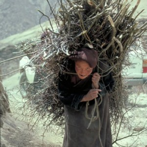 tibet woman carrying branches