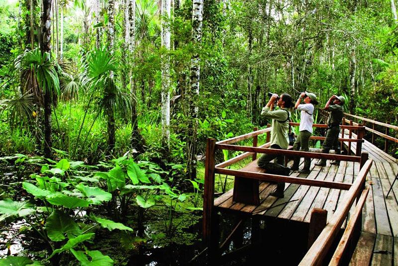 Amazon Hike - Inkaterra Reserva Amazonica
