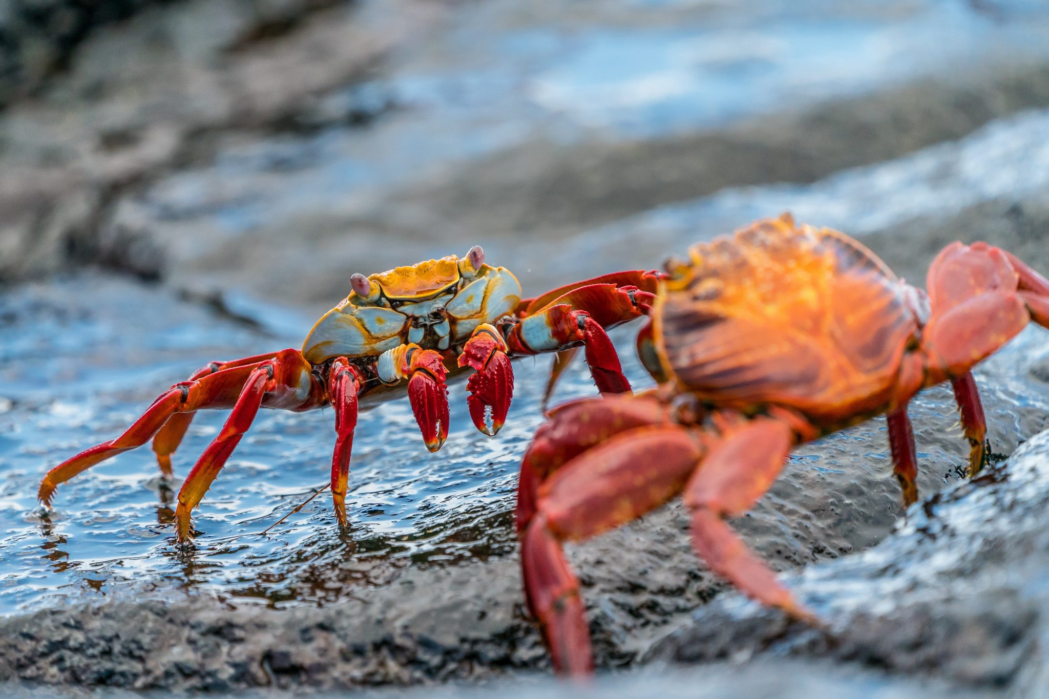 What is the Cost of a Trip to Galapagos Islands?   Myths and