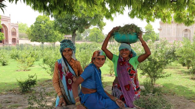 Women harvesting, tourist traps