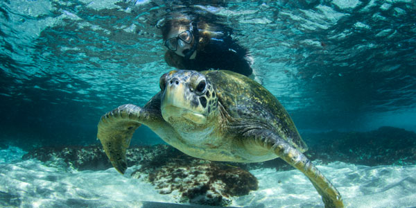 Galapagos Diving with turtles
